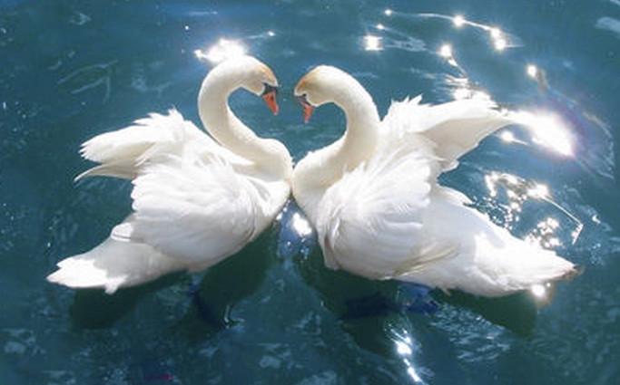 Настоящая любовь и энергетические центры человека